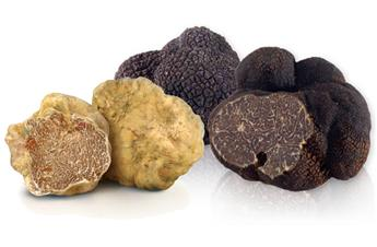 Our different varieties of truffles